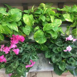 Gardening Gifts Buffalo NY